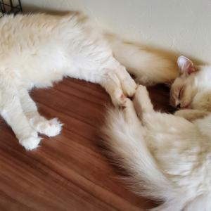 猫書いて寝子と読む