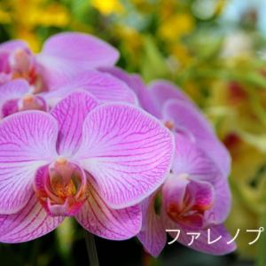 蘭の花と花言葉