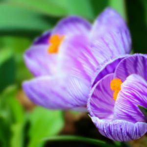 春の訪れ!可愛いお花です!
