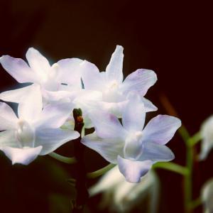白い蘭の花 !綺麗な可愛い花。