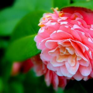 素敵な花の笑顔に感謝!