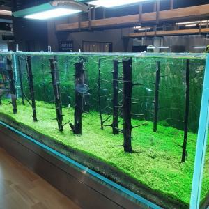 【龍仁】 AQUA GARDEN CAFE「아쿠아가든카페」 ここは来て良かった~~~ 水草も魚も ちゃくちゃきれいです