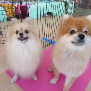 11月15日は【いいわんこの日】(*^-^*) 犬のしつけ教室@アロハドギー