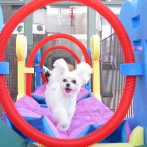 4/26の【Dogscan】は開催中止とさせていただきます。  犬のしつけ教室@アロハドギー
