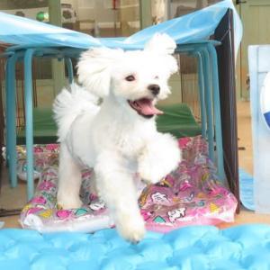 「緊急事態宣言」解除後の対応について 犬のしつけ教室@アロハドギー