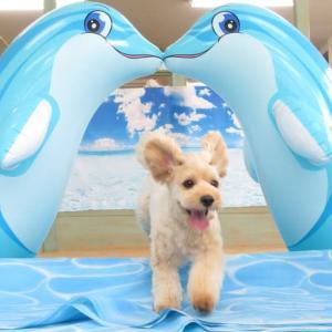 8月30日(日)の【ALOHA塾】は、 未病ケアの《Dogscan》  犬のしつけ教室@アロハドギー