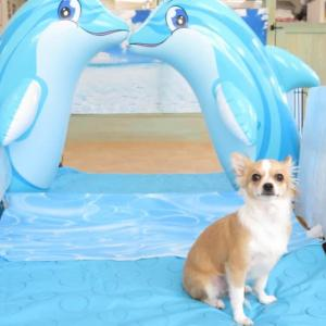 幼稚園体験にきてくれた【空(くう)くん】 犬のしつけ教室@アロハドギー