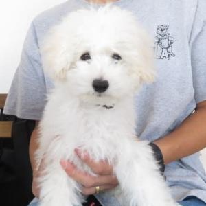 パピーパーティ-開催しました(9/6)【ALOHA塾】  犬のしつけ教室@アロハドギー