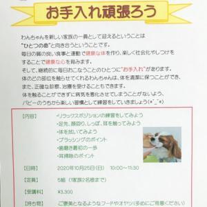 幼稚園体験にきてくれた黒柴の【紬ちゃん】 犬のしつけ教室@アロハドギー