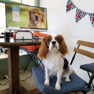 9月19日(日)の【ALOHA塾】は、 未病ケアの《Dogscan》  犬のしつけ教室@アロハドギー