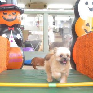 24日(土)は【わんこ整体day】  犬のしつけ教室@アロハドギー