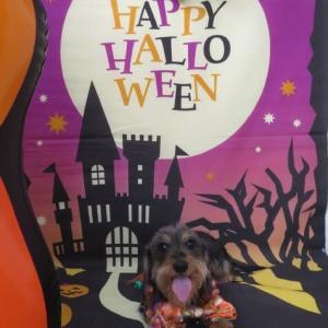 今週の幼稚園は《ハロウィン撮影会》(*^-^*)  犬のしつけ教室@アロハドギー