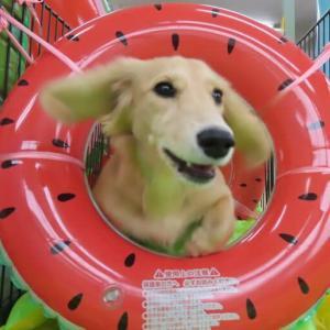 9月5日(日)のパピーパーティーの予約状況です。  犬のしつけ教室@アロハドギー
