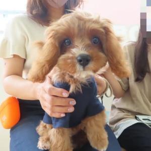 パピーパーティ-開催しました(9/5)【ALOHA塾】  犬のしつけ教室@アロハドギー