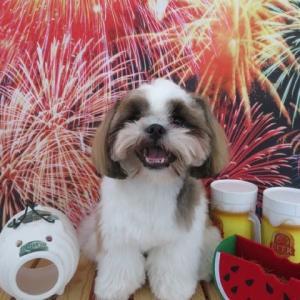 明日の土曜日は【わんこ整体day】  犬のしつけ教室@アロハドギー