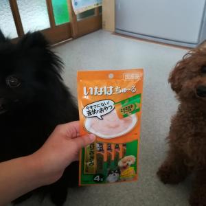 犬用チャオちゅーるの食いつきは凄かった