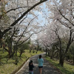 桜ですね。