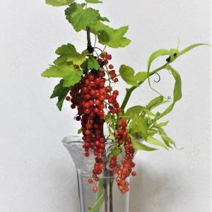 フサスグリ「植えてはいけない植物」