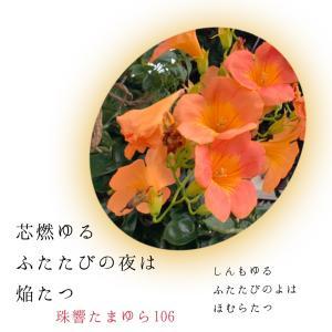 令和2年・長月231: ♡徒花40♡抱いてよと♡艶戀♡