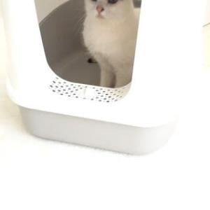 愛猫WCの最善手…?