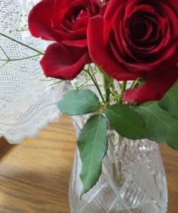 6月のバラ