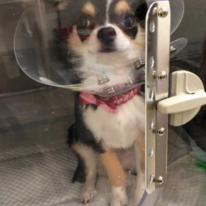 愛犬が事故に⁈からの奇跡