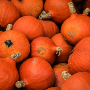 栄養満点かぼちゃの種を食べてみよう