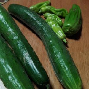 夏野菜の恩返しが始まったー。