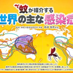 【蚊:②】日本脳炎