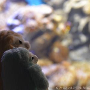 【神奈川】【えのすい】新江ノ島水族館