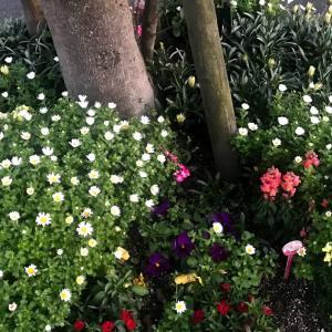 植木の花壇