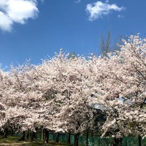 花畑園芸公園の花見