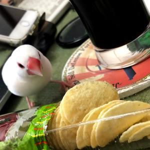 ポテトチップスつまみ文鳥