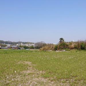 西野々古墳群(富田林市) ・石川沿いの田園地帯に溶け込む後期古墳群