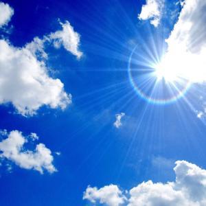 とにかく太陽に当たるといいみたい
