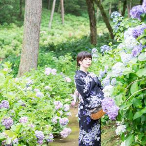 あじさい祭りが中止になったので太閤山ランドで紫陽花ポートレートしてきました。