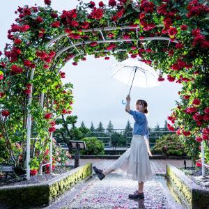 雨の金沢南総合運動公園のバラ園で雨バラポートレート