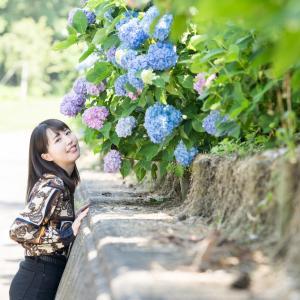 18日からあじさい祭りが始まる太閤山ランドで紫陽花が咲き始めてきました【20日は着物&浴衣撮影会もやります】