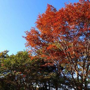 【鎌倉】源氏山公園の紅葉2019♪