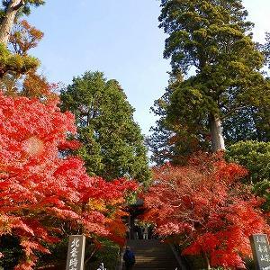 【鎌倉紅葉】今観光できるところ~台風の倒木で歩けないところも