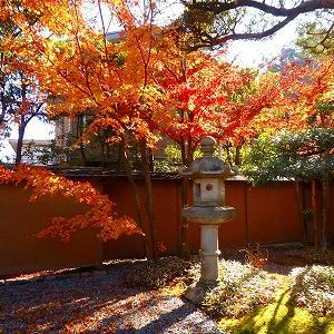 【鎌倉】紅葉絶景★一条恵観山荘から鎌倉宮へ