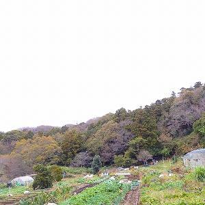 鎌倉の里山・六国見山ハイキング★海を見晴らし畑の風景や切通も