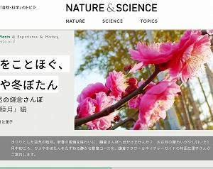 新春の鎌倉★ウメや冬ぼたん、聖域・御谷を訪れる旅…NATURE&SCIENCEに記事をアップ