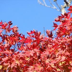 【鎌倉】紅葉の安国論寺~路地を山越え★輝く滑川や海を眺めて建長寺へ