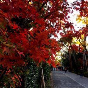 下鴨神社でぶらり紅葉狩り