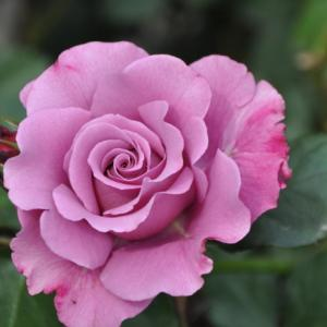 籐拓弘先生の『言葉の花束』