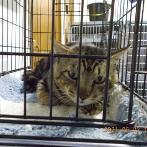 保護猫の去勢手術