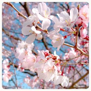 春カラー❁.*・゚