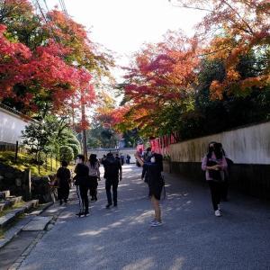 通天橋を望む(東福寺だよ)