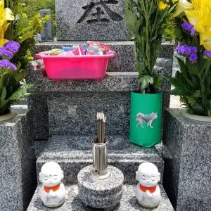 お墓参りに行ってきました(^^)(^^)